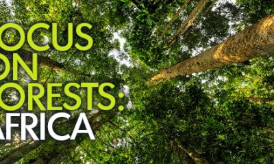 Photo © Ricky Martin / Center for International Forestry Research (CIFOR)
