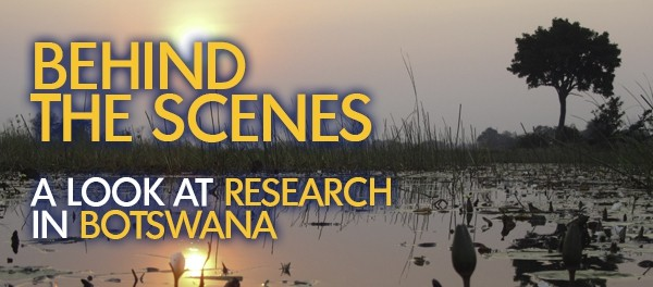 Behind the scenes: Botswana research feature | SAIIA