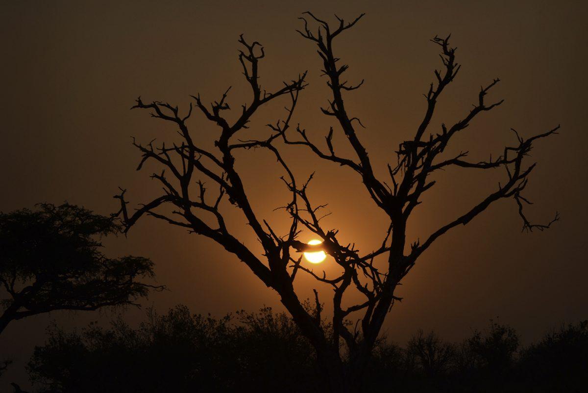 Chobe-sunrise-small