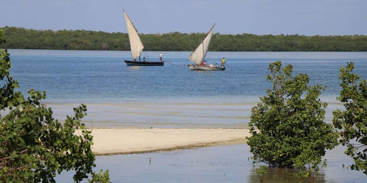 Fishers and mangrove swamps, Mozambique. Image: Romy Chevallier