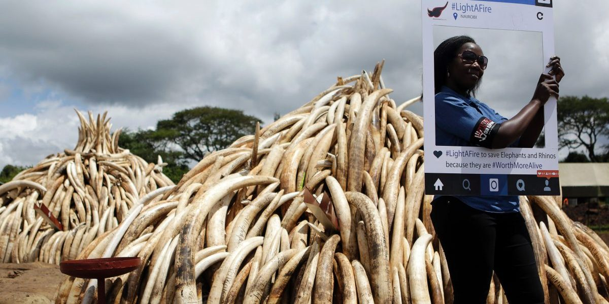 A wildlife conservationist poses with a cut-out placard bearing the message 'WorthMoreAlive' advocating for an end to elephant poaching. Image: Getty, Tony Karumba/AFP
