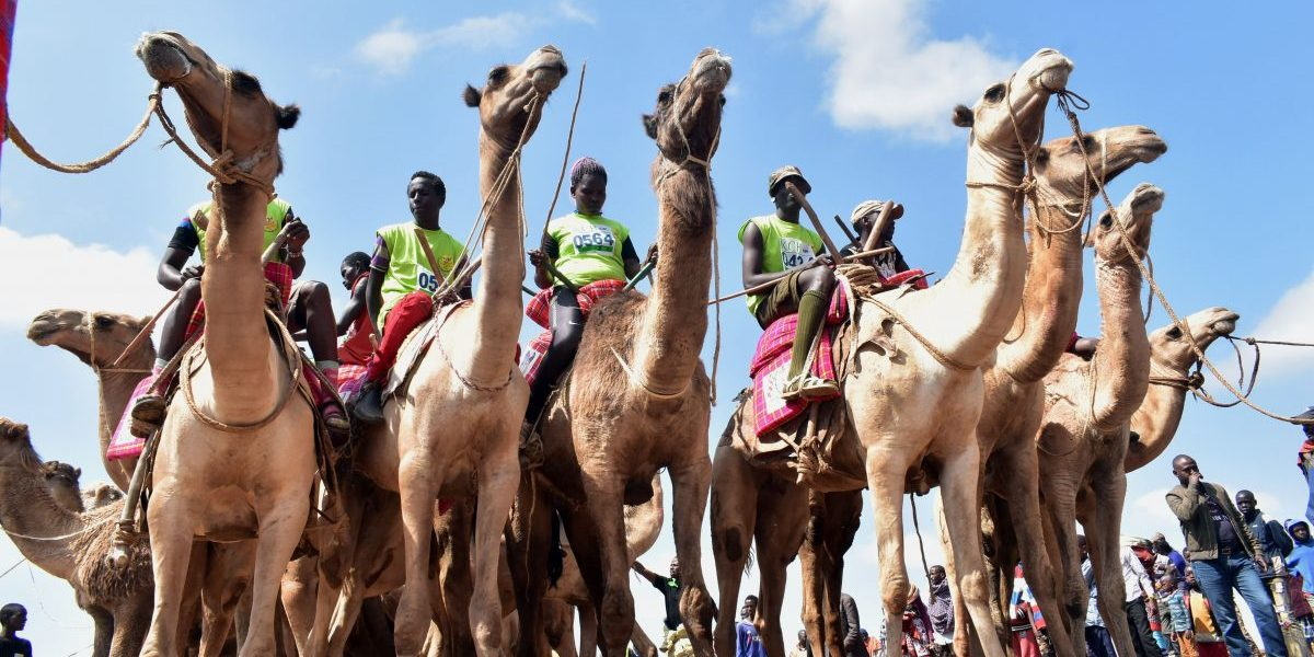 The event held annually, which aims at promoting sports and cultural tourism, is Kenya's best known and prestigious camel race attracting both international and local competitors in amateur and professional categories who breathing life into the remote desert town populated by Kenya's indigenous and pastoral communities including Samburu, Turkana and Pokot tribes. Image: Getty, Andrew Kasuku