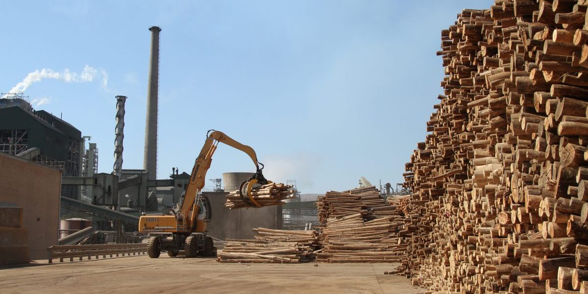A claw crane moves timber logs from a store pile at the Ngodwana wood mill, operated by Sappi Ltd., the world's biggest producer of dissolving wood pulp, in Mpumalanga, South Africa. Image: Getty, Dean Hutton/Bloomberg
