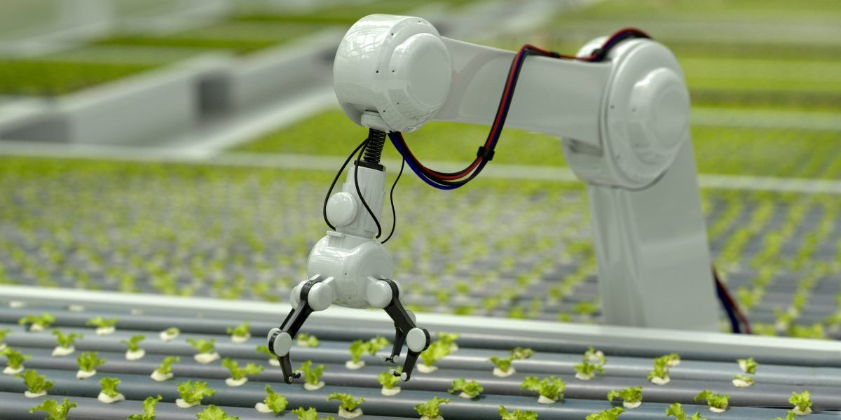 3D Robotic arm harvesting hydroponic lettuce in a greenhouse. Image: Getty, Andresr