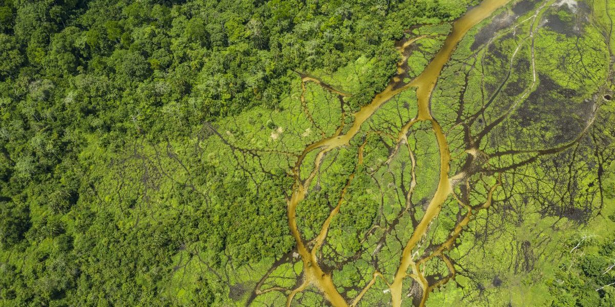 Aerial view of a Bai (saline, mineral lick) in the rainforest of the Congo Basin. Image: Getty, Guenterguni