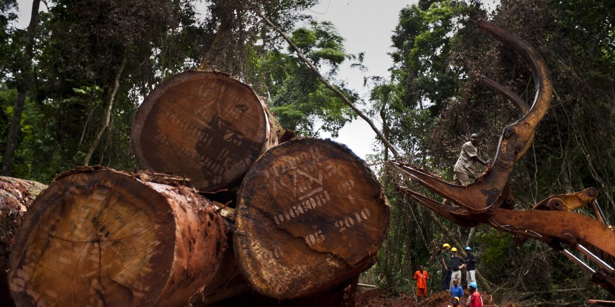 FSC sustainable logging in the natural forest around the Alpicam logging concession in the Kika region of Cameroon, 2010. Image: Getty, Brent Stirton