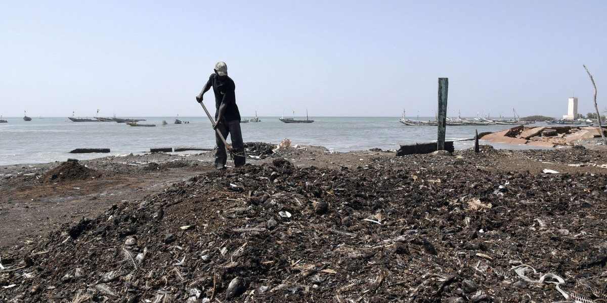 A man uses a rake to arrange leftover from the fish drying process at the deserted fish market in Rufisque, Senegal. The World Bank has warned that sub-Saharan Africa could slip into its first recession in 25 years because of coronavirus and has called for debt relief to ease the impact on the world's most impoverished region. Image: Getty, Seyllou/AFP