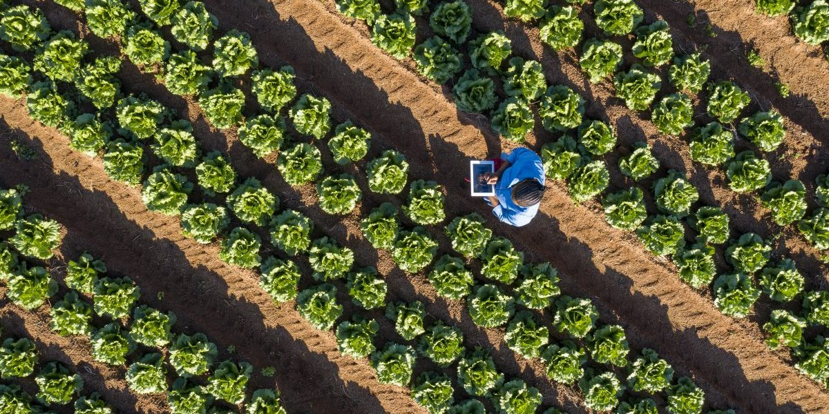 Modern farmers are using digital technology to collect data and monitor crops. Image: Getty, Martin Harvey