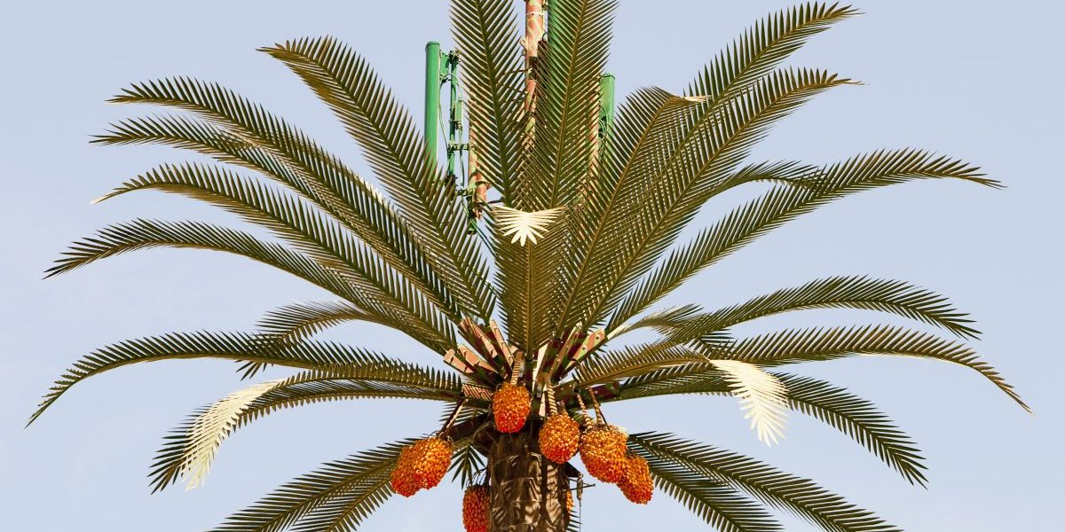 A cell phone tower made to look like a palm tree in Dubak. (Getty images)