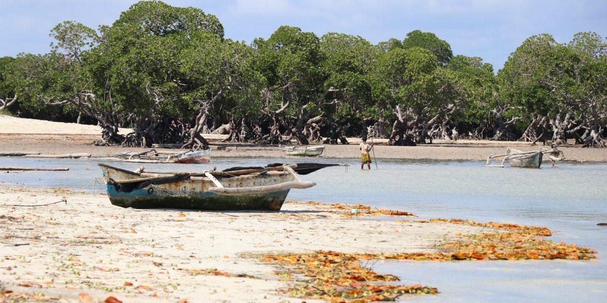 Magrove forests, Bazaruto Archipelago, Mozambique. Image: Romy Chevallier